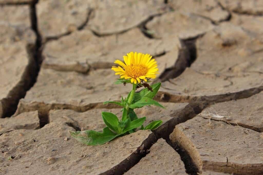 Milagre é florescer nas seca